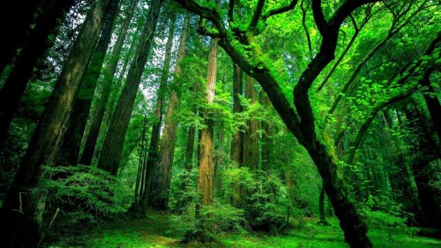 Temperate+Rainforest-1